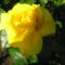 Anyu virágai 017