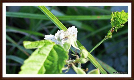 ártéri virág
