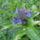 Demeter Gyöngyi képei -védett növények