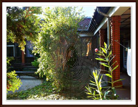 pókháló 2