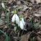 Itt a tavasz 5