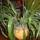 Kaktusz-006_1383079_1306_t