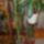 Kaktusz-007_1383078_7056_t
