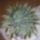 Kaktusz-009_1383076_2678_t