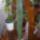 Kaktusz-011_1383074_7526_t