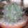 Kaktusz-012_1383072_1090_t