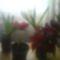 Fénykép 0261 Virágok Vegyesen