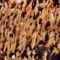 Occupy Mozgalom Világszerte 900 városban 6