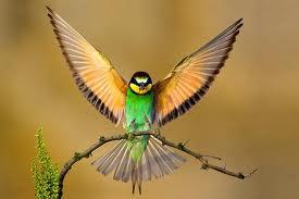 kis madárka
