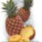 ananasz f