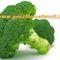 brokkoli_egeszseg_broccoli f