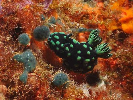 australia-nagy_korallzátony 2