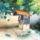 Kerekeskut___akvarell_1389899_8108_t