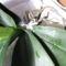 Orchidea gyökereztető hormonporral beszórva 1