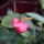Flamingo_1380692_6890_t