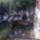 Hodoniczkiné galambjai