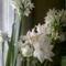 újabb nárcisz, csokros virágokkal (NARCIS PAPERWHITE)