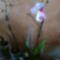Különleges nőnapi orhim