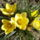 Csernus Sándorné Nóri képei - Tavaszköszöntő virágok