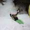 Még mindig öröm a hóban hemperegni