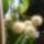 Fenyvesiné Sz.Éva Dézsás növények