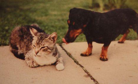 Majd én megfürdetlek/ kutya, cica barátság!