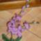 orchidea3