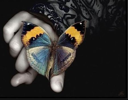 pillango02