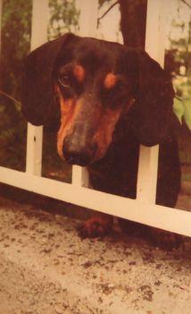 Riki kutya - portré