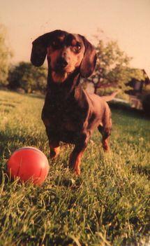 Riki kutya , szeretem a labdát