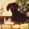 Riki kutya, stár fotó