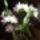 Dendrobium_1397251_6517_t
