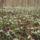 Lacziné Marika képei  -  Nemzeti Park természetvilága