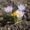 márciusi virágok 2