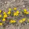 márciusi virágok 5