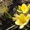márciusi virágok 6