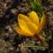 márciusi virágok 7