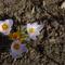 márciusi virágok 8