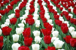 A legszebb tavaszi virágok