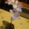 orchidea másként 003