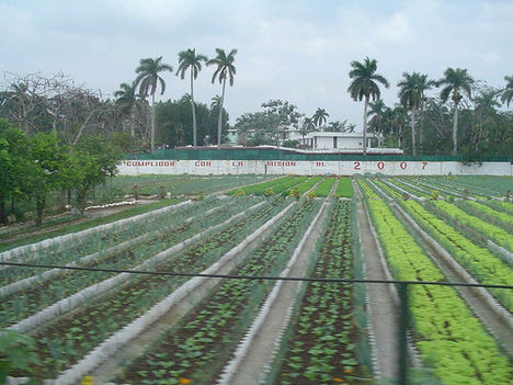 Havanna városi kertek