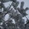 Téli képek 7