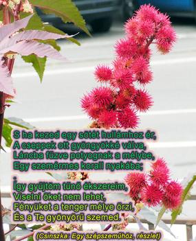 idézeteské-virággal