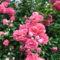 Kertészeklub vezetőjének  képei 1