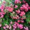 Kertészeklub vezetőjének  képei 4