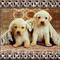 két kutyakölyök