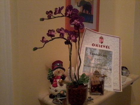 lila orchirdea