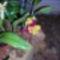 orchidea kiállítás 2011. nov.05. 035