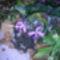 orchidea kiállítás 2011. nov.05. 040