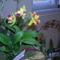orchidea kiállítás 2011. nov.05. 050